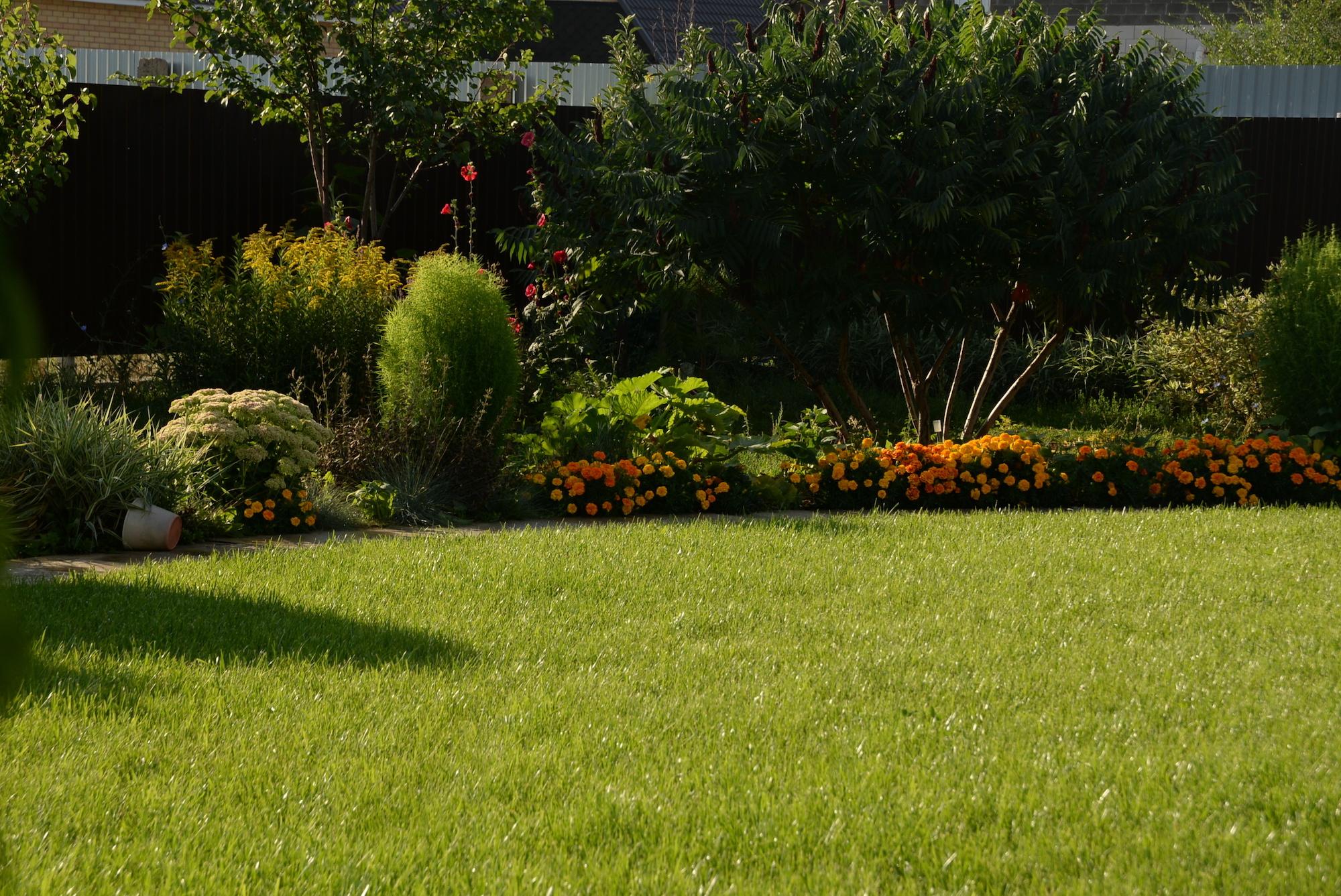 green grass, lawn in the garden