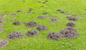 pests in a natural lawn