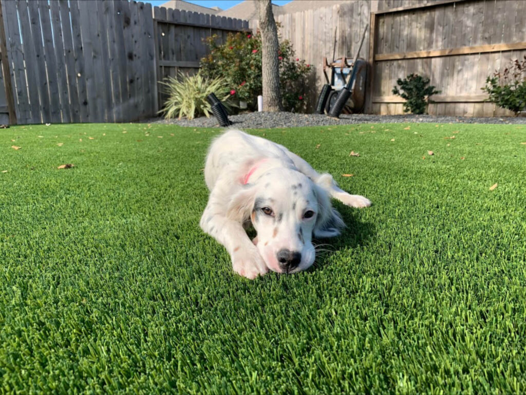 dog relaxing on artificial pet turf